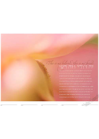 Ketubah by Daniel Sroka,Blush